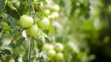 Актуальны ли профессиональные объединения фермеров?