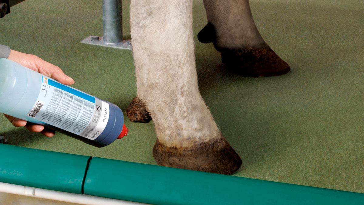 DairyFarming_Foot care products_1200x675px.jpg